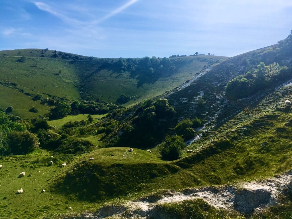Sheep grazing in the South Downs National Park near Eastbourne, East Sussex, May 2020 - photo by Eleanor Best