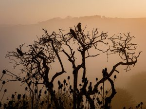 Misty sunrise, with a silhouetted tree in the foreground.