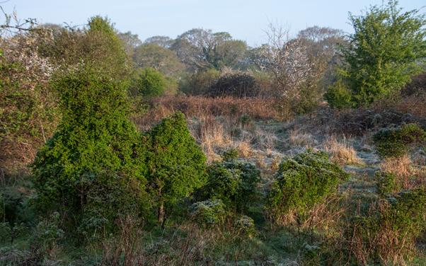Photo showing shrubs and grassland at Knepp Castle estate.