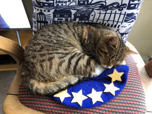 Cat curled up asleep on a blue beret with yellow stars.
