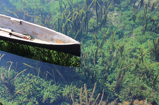 Boat on clear water with kelp under the surface