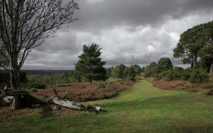 View from Ashdown Forest's Old Lodge Nature Reserve