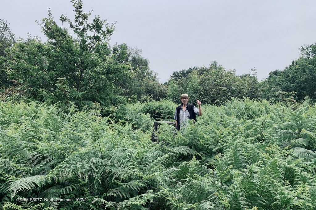 James in the middle of some fern bushes.