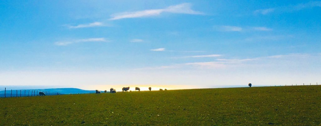 Sheep on the East Sussex South Downs at sunset