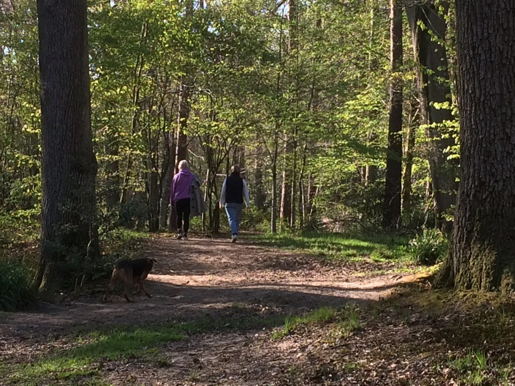 Two people and a dog walking in the Ashdown Forest